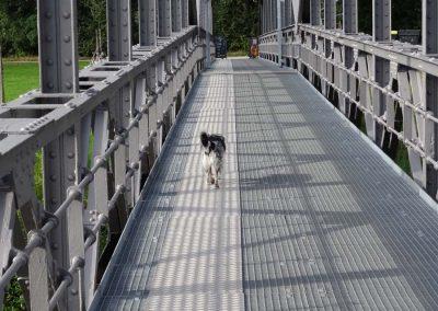 Super Hundeservice... :-)