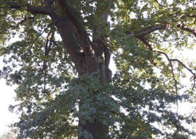 uns begeistern die alten Bäume