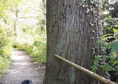 ein herrlicher Park mit alten großen Bäumen