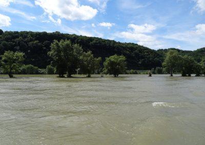 Unser 1 Jahr und dann gleich Hochwasser auf dem Rhein...