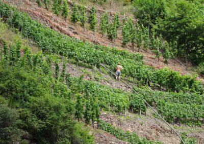 Weinanbau in Steillage