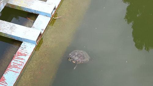 Schildkröten...